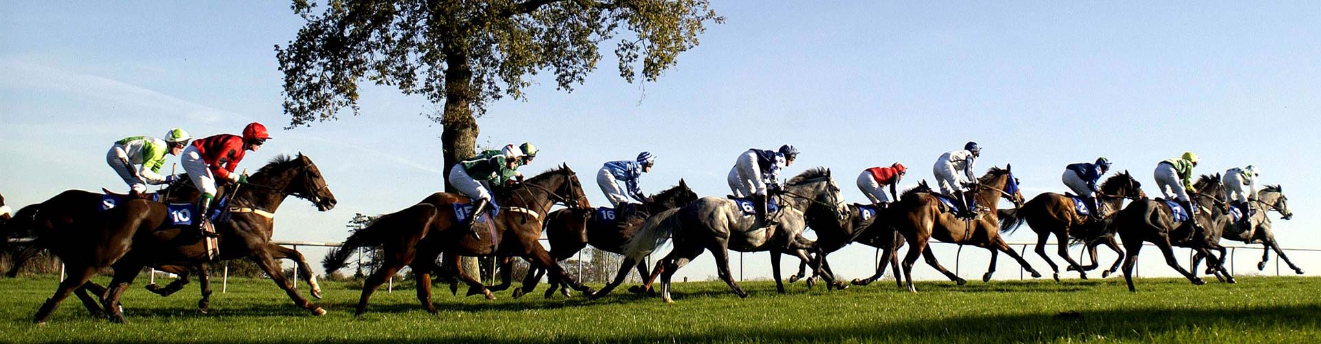 Annual Membership at Plumpton Racecourse