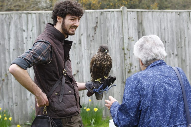 Sussex Falconry